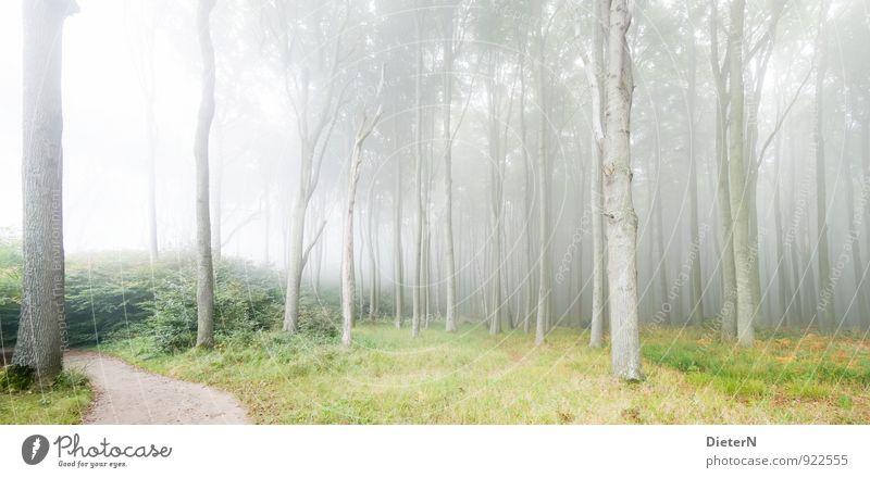 Nebelwald Natur grün Landschaft Wald grau braun Klima Mecklenburg-Vorpommern Gespensterwald