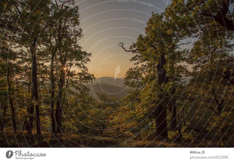 Thüringer Wald-Landschaft Ferien & Urlaub & Reisen Ausflug Abenteuer Ferne Freiheit Natur Sonnenaufgang Sonnenuntergang Herbst Schönes Wetter Pflanze Baum blau
