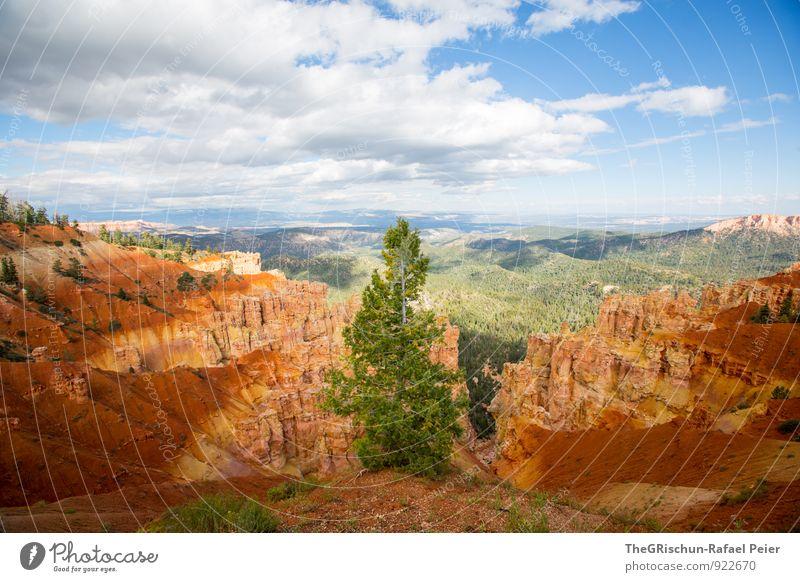 Bryce - Tanne Umwelt Natur Landschaft Erde Sand Himmel Wolken blau braun gold grau grün orange schwarz weiß Baum Bryce Canyon Bryce Canyon National Park Felsen