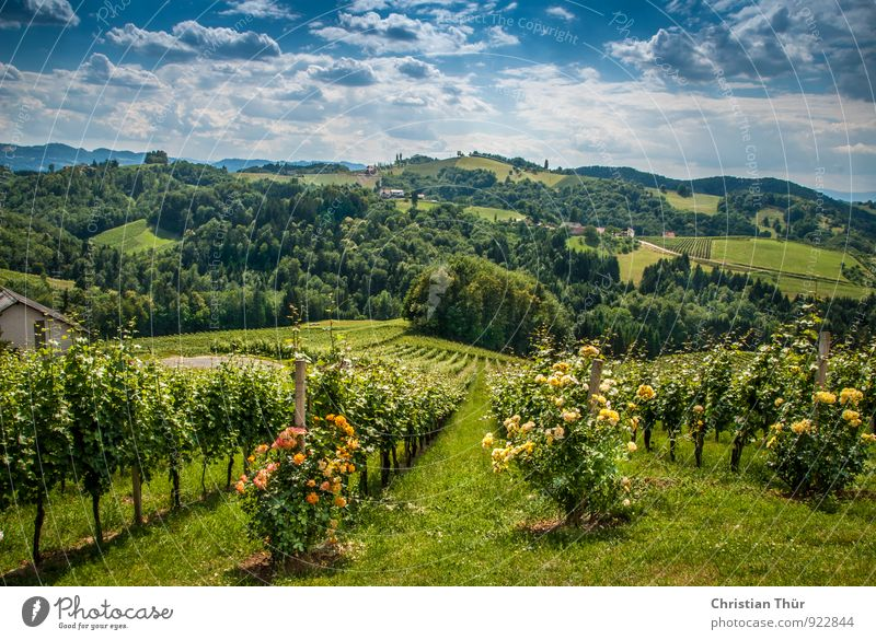 Sommer Chill out Natur Ferien & Urlaub & Reisen Sommer Baum Erholung Landschaft ruhig Wolken Umwelt Berge u. Gebirge Leben Wiese Gesundheit Feld Zufriedenheit Tourismus