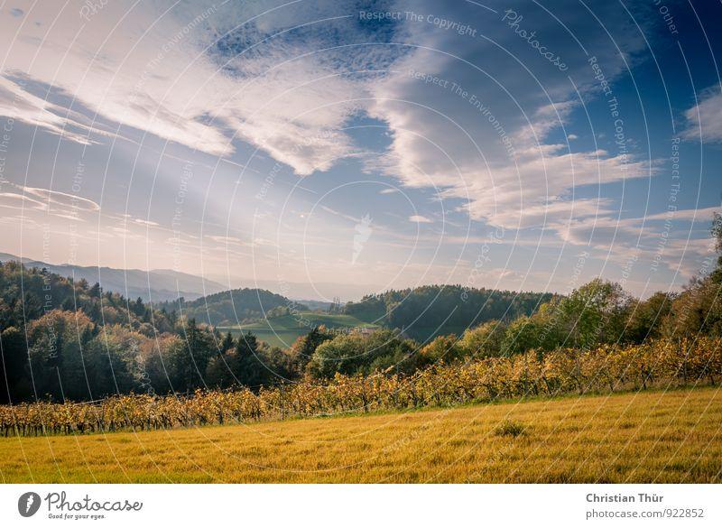 Herbstimpression Natur Ferien & Urlaub & Reisen Baum Erholung Landschaft ruhig Wolken Wald Umwelt Berge u. Gebirge Leben Wiese Gras Freiheit Gesundheit