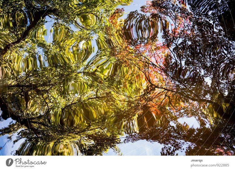Fraktal elegant Stil Umwelt Natur Urelemente Wasser Herbst Baum Ast Blatt außergewöhnlich blau gelb grün orange Farbe Kreativität Perspektive Surrealismus