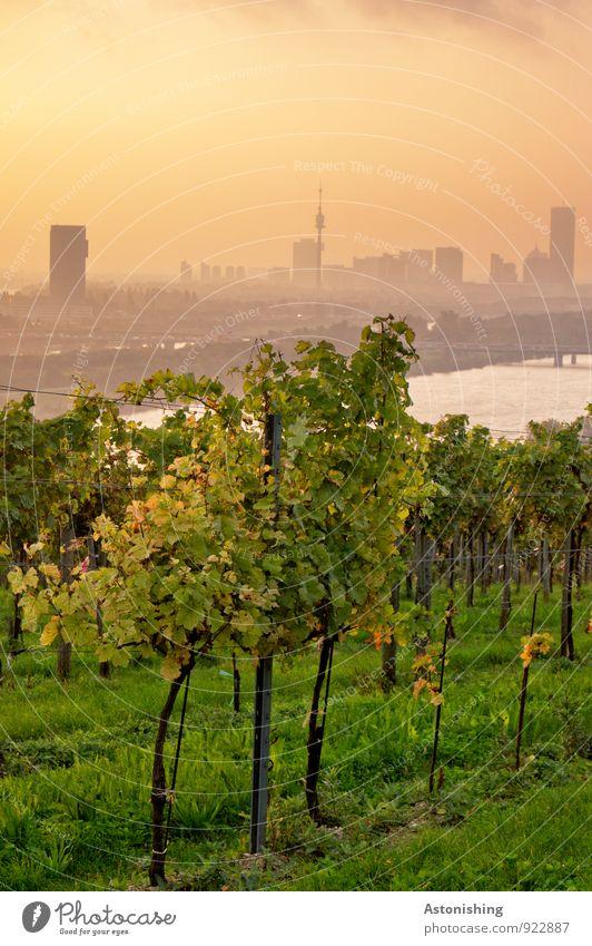 Morgen über Wien 3 Umwelt Natur Landschaft Pflanze Luft Wasser Himmel Horizont Sonnenaufgang Sonnenuntergang Sonnenlicht Herbst Wetter Schönes Wetter Gras