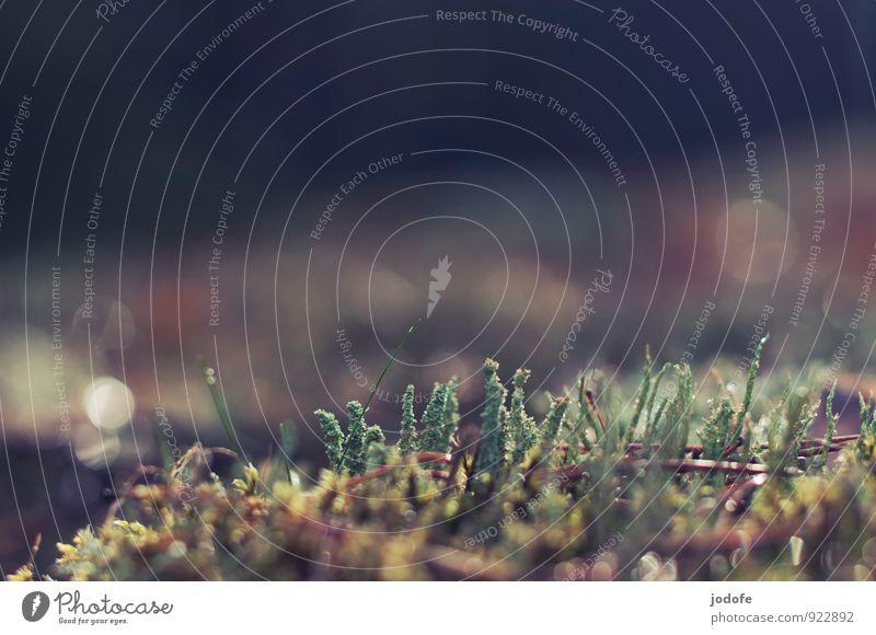 Waldboden Umwelt Natur Pflanze Moos ästhetisch Flechten grün glänzend ruhig Wachstum herbstlich Herbst kahl Makroaufnahme Farbfoto Gedeckte Farben Außenaufnahme