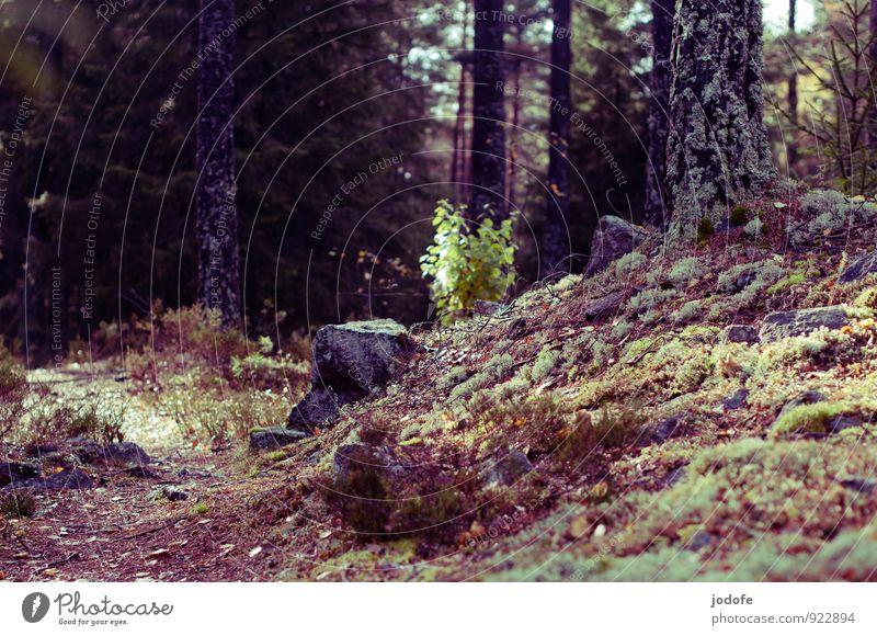 Moos & Flechten Natur Pflanze Baum Landschaft dunkel Wald Berge u. Gebirge Herbst Stimmung Felsen Erde geheimnisvoll Pilz Moos herbstlich kuschlig