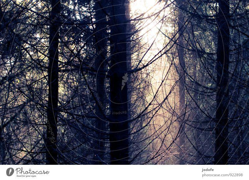 Und es werde ... Natur Pflanze Baum Sonne Landschaft Einsamkeit ruhig Winter Wald Berge u. Gebirge Umwelt Herbst Tod Stimmung Nebel Schönes Wetter