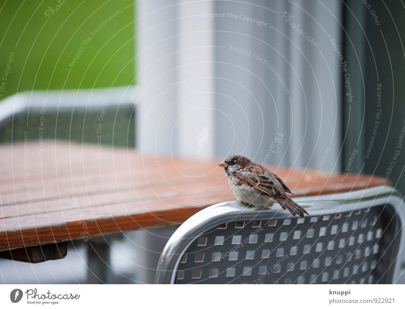 Wo bleibt mein Kaffee!?... Umwelt Natur Wolken Sonne Sonnenlicht Sommer Herbst Schönes Wetter Park Tier Wildtier Vogel Spatz 1 Tisch Tischplatte Stuhl