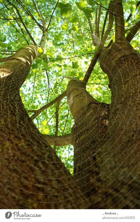 Licht am Ende des Wipfels grün Sommer Baum Blatt Beleuchtung Lampe braun 3 Ast Zweig Baumkrone