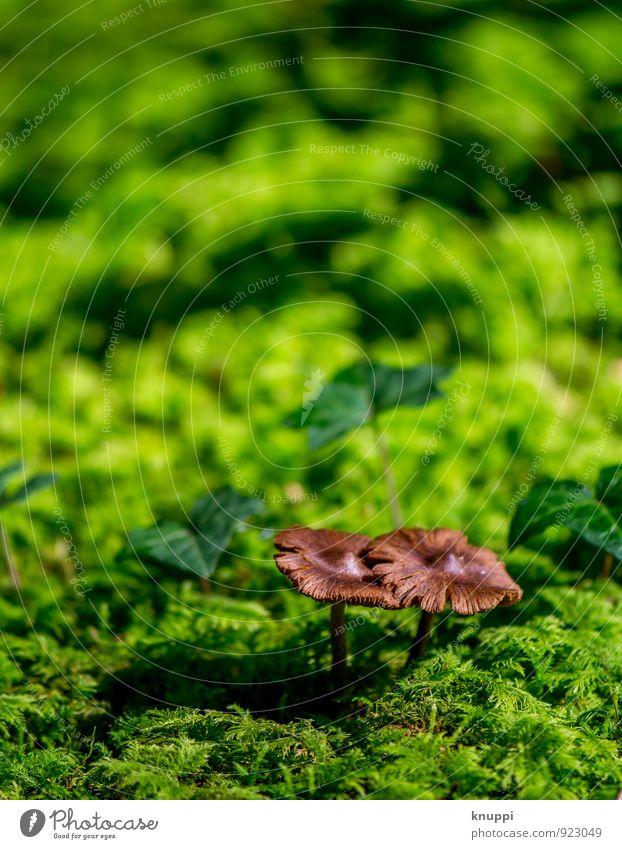 paarweise Natur Pflanze grün Sonne schwarz Wald Umwelt Wärme Herbst braun Paar Park wild frisch Schönes Wetter
