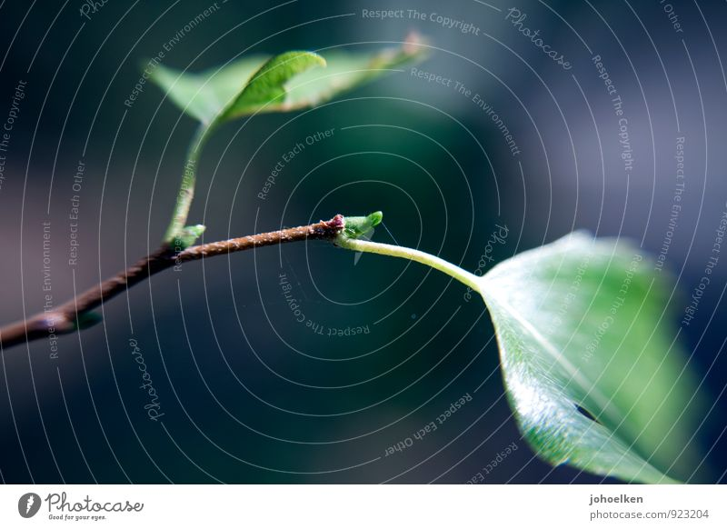 Wachstum Umwelt Natur Pflanze Sonnenlicht Frühling Sommer Schönes Wetter Baum Blatt Grünpflanze Baumschössling Trieb Birke Garten Park Wald Fressen nah