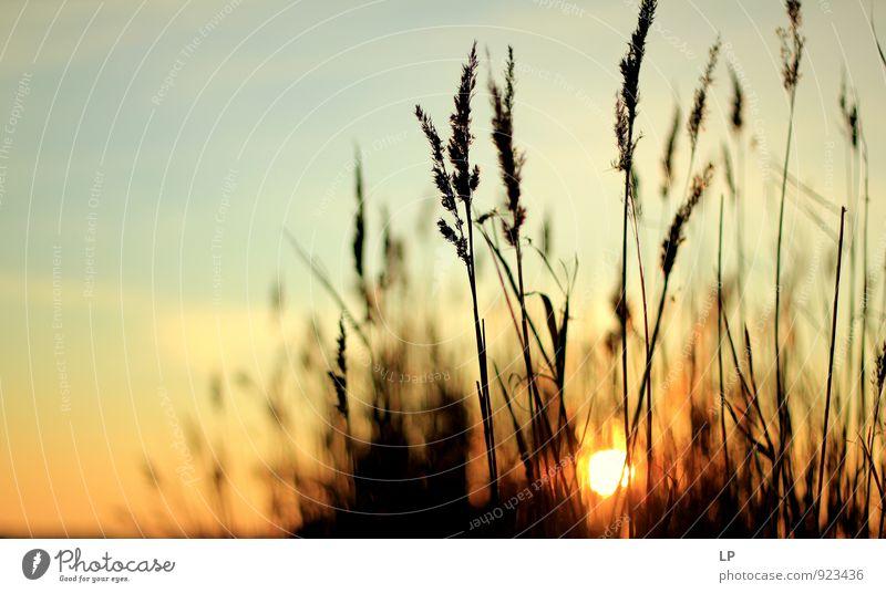 II0II Umwelt Natur Landschaft Pflanze Urelemente Luft Himmel Sonne Sonnenaufgang Sonnenuntergang Winter Sträucher Grünpflanze Wildpflanze fest Ferne natürlich