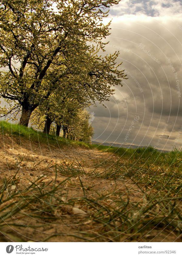 Schieflage Baum Blatt Wolken Frühling Wege & Pfade Blüte Stimmung Ausflug Spaziergang Fußweg Blattknospe Sauerstoff Blattgrün Photosynthese Rätsel