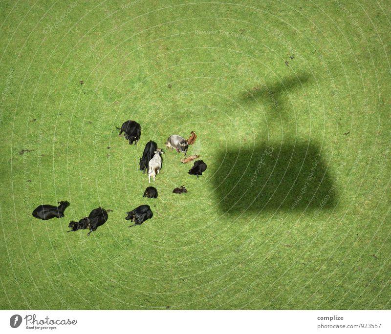 Ausgebremst Lebensmittel Fleisch Wurstwaren Käse Milcherzeugnisse Ernährung Erholung ruhig Umwelt Sonne Klima Pflanze Gras Sträucher Grünpflanze Wiese Hügel