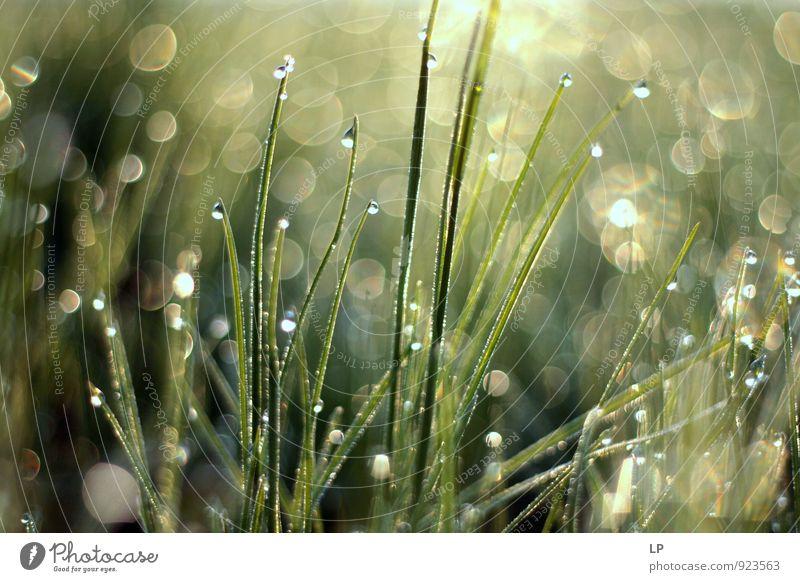 Natur Pflanze schön grün Landschaft Umwelt Gefühle Gras grau Kunst glänzend Wachstum Zufriedenheit Wassertropfen Warmherzigkeit Lebensfreude