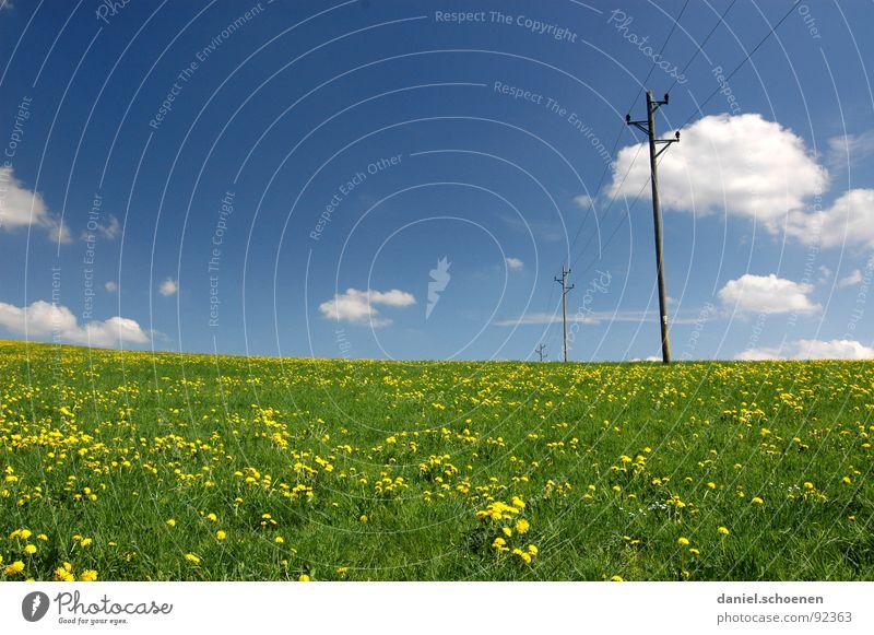 neulich auf der Wiese schön Himmel Blume grün blau Sommer Wolken gelb Erholung Blüte Frühling Hintergrundbild Wetter Elektrizität Freizeit & Hobby Löwenzahn