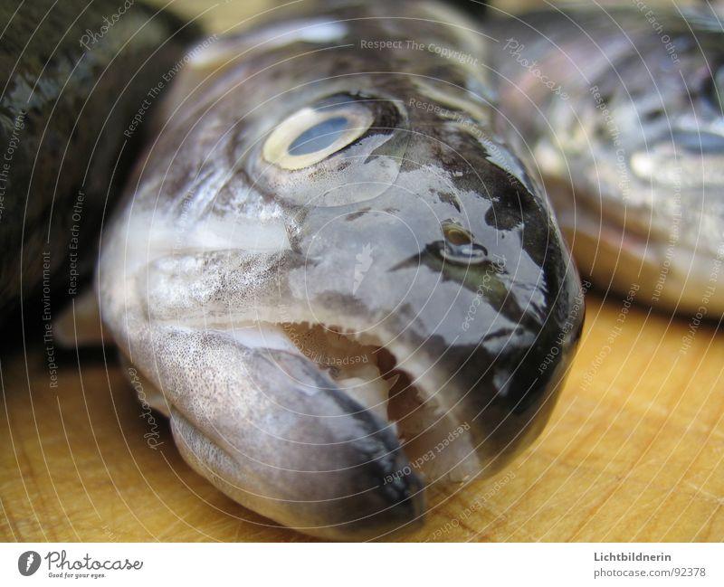 forelle roh Tod weiß lügen Freizeit & Hobby frisch Lachs Schweinefilet ausbreiten Tier Küche kochen & garen Regenbogen biegen Angeln Meeresfrüchte nah Fischkopf