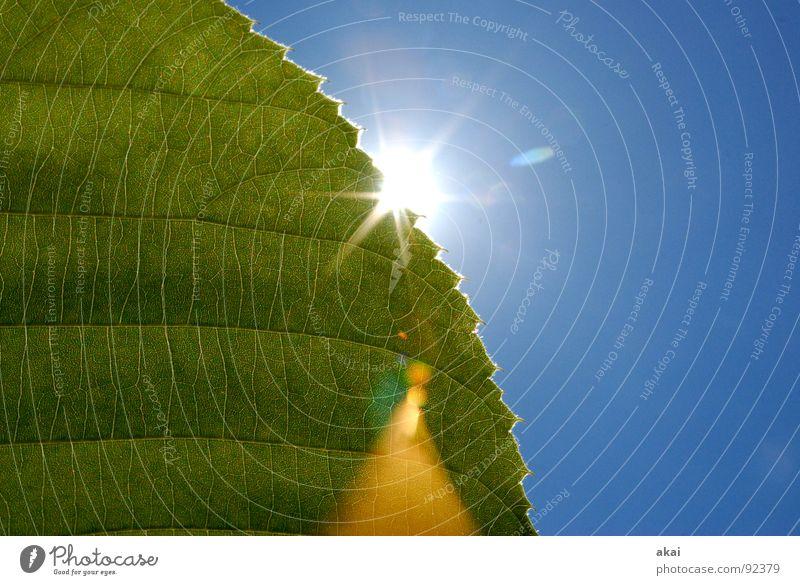 Das Blatt 8 Natur Himmel Baum Sonne grün blau Pflanze Leben Kraft Hintergrundbild Umwelt geschlossen Sträucher nah Ast