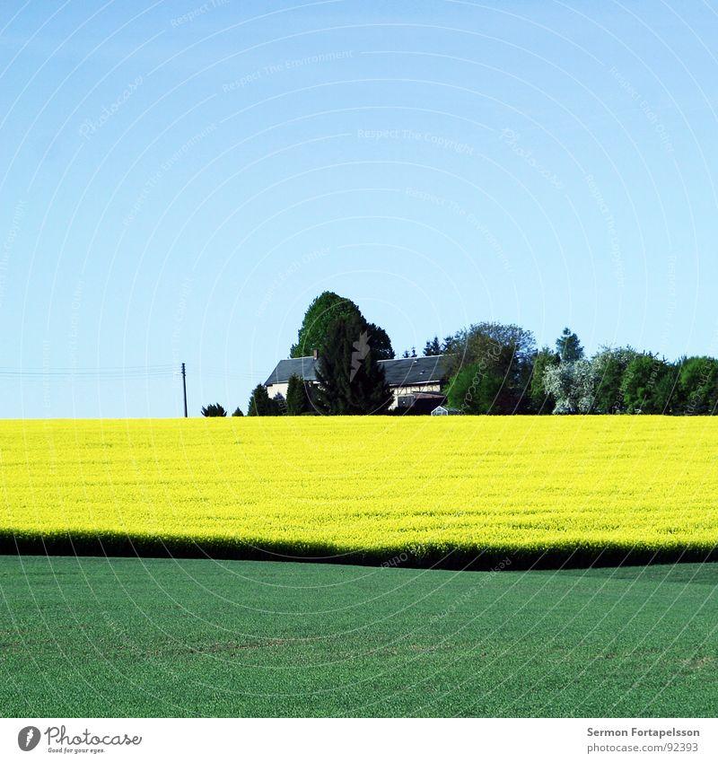 sub_urban Feld Raps Frühling Mai Horizont Physik Ferne groß Wiese Pflanze grün gelb Haus Wohnsiedlung Baum Wald Wäldchen Elektrizität Elektrisches Gerät