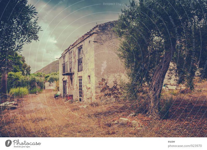 Immer da wo du bist bin ich nie ... Gemälde Natur Baum Ruine Bauwerk Gebäude Fassade alt authentisch dreckig dunkel fantastisch historisch kaputt trist trocken