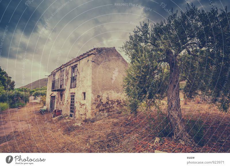 Neulich im Paradies Natur alt Einsamkeit dunkel Fenster Architektur Gebäude braun Fassade dreckig trist Tür authentisch fantastisch Vergänglichkeit kaputt