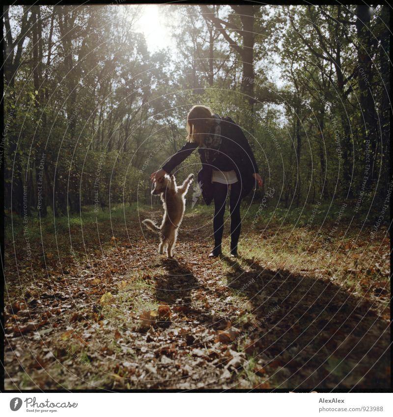 Junge Frau im Wald mit ihrem kleinen Hund Ausflug Jugendliche 18-30 Jahre Erwachsene Natur Schönes Wetter Fußweg Spielen ästhetisch frei Fröhlichkeit Glück