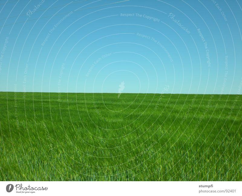 feld Himmel Natur blau grün Sommer Frühling Wiese Gras Feld Luft Getreide Weizen