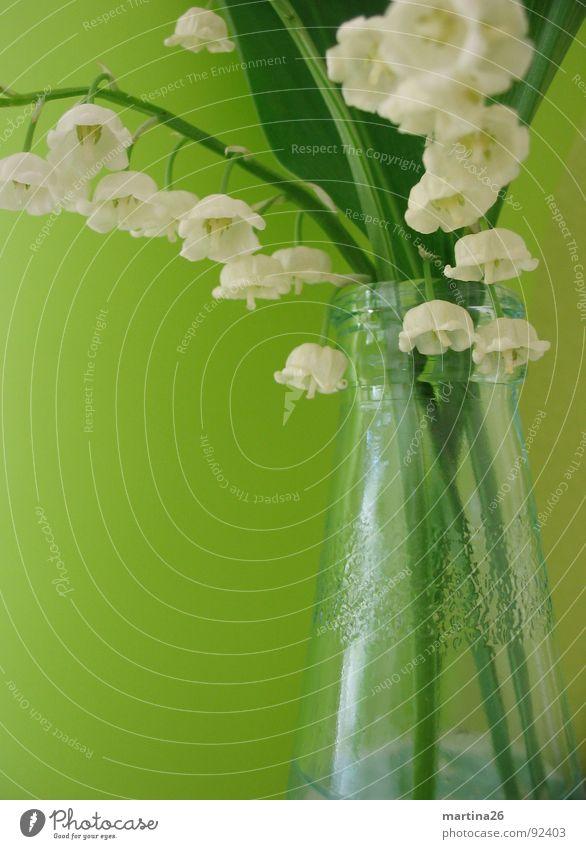 lily of the valley weiß Blume grün springen Blüte Frühling Glas frisch Dekoration & Verzierung zart Stengel Blühend Duft Blumenstrauß Flasche Vase