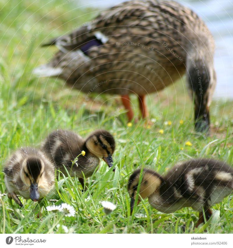 auf der suche Lebensmittel Ernährung Bildung Berufsausbildung Natur Tier Frühling Blume Gras Park Wiese Küste Fluss Vogel beobachten fangen Fressen klein