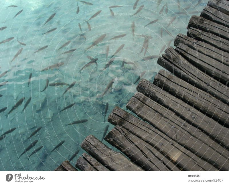 Steg Kroatien Fischschwarm See fish water bridge woodbridge shoal lake plitvicka jezera croatia plitwitzer