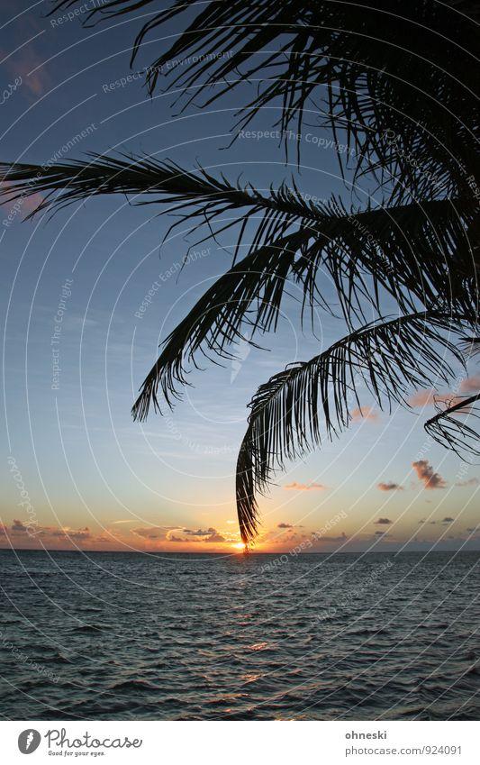 Burn Baby Burn Urelemente Horizont Sonnenaufgang Sonnenuntergang Schönes Wetter Palme Palmenwedel Strand Meer Atlantik Stimmung ruhig Ferien & Urlaub & Reisen