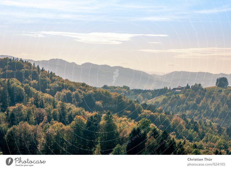 Herbstlandschaft Ferien & Urlaub & Reisen Tourismus Ausflug Ferne Umwelt Natur Landschaft Himmel Wolken Schönes Wetter Pflanze Baum Gras Sträucher Feld Wald