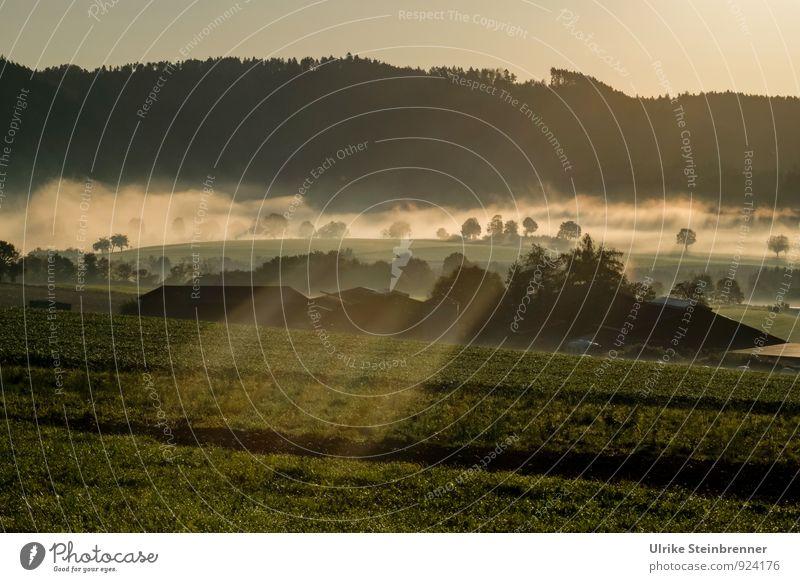 Nebelwallen 2 Umwelt Natur Landschaft Pflanze Luft Wasser Himmel Herbst Baum Gras Sträucher Feld Wald Gebäude Bauernhof Dach leuchten natürlich Herbstnebel