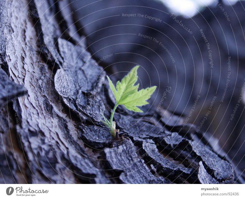 Green Leaf Natur springen