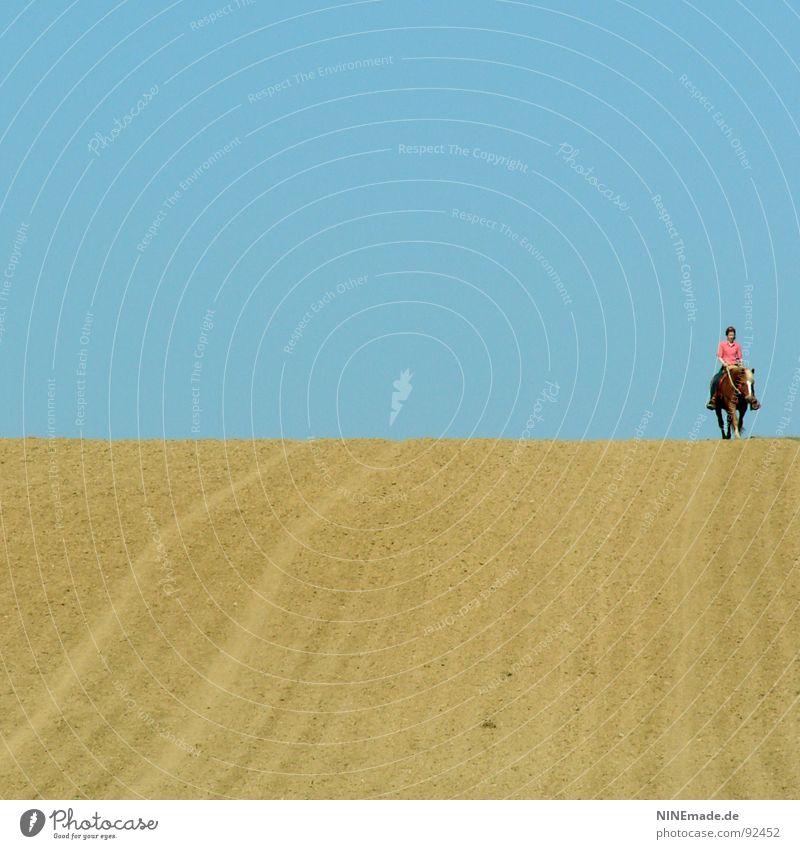 Der Horizont II himmelblau Feld gelb Spurrinne Ferne Pferd rosa weiß braun Sommer Gefühle Gute Laune Einsamkeit ruhig genießen laufen klein groß Gelassenheit