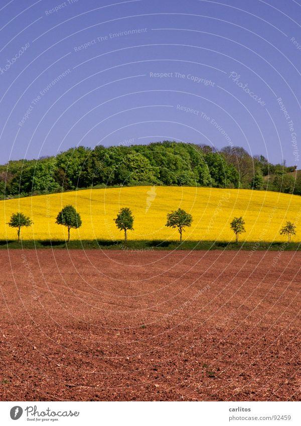 und noch'n Rapsfeld ... Himmel grün Baum Wald Landschaft Frühling Erde braun Hügel Ackerbau Raps Rapsfeld Waldrand Brachland dunkelgrün Baumreihe