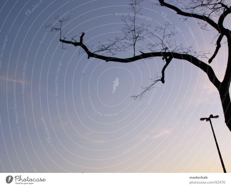 ...UND DER BAUM, DER GROSSE Dämmerung Baum Laterne Lampe Symbiose Einsamkeit verloren vergleichen böse Himmel Trauer Verzweiflung Schönes Wetter blau Ast