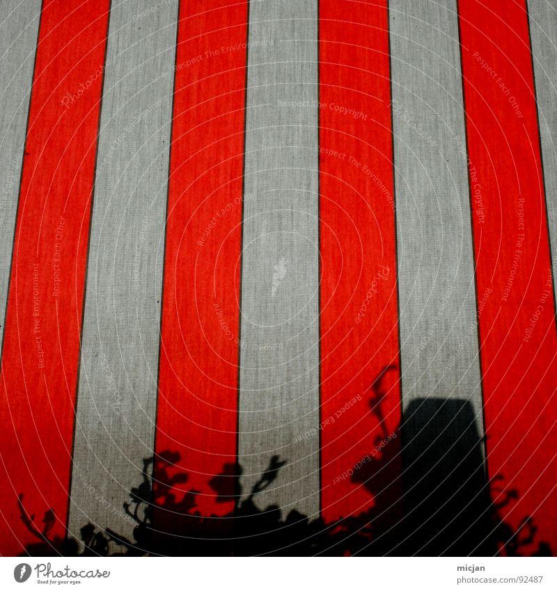 Efeu incognito schön weiß rot schwarz Farbe Herbst Wand grau Linie hell Beleuchtung dreckig Ecke Fahne Bodenbelag Klarheit