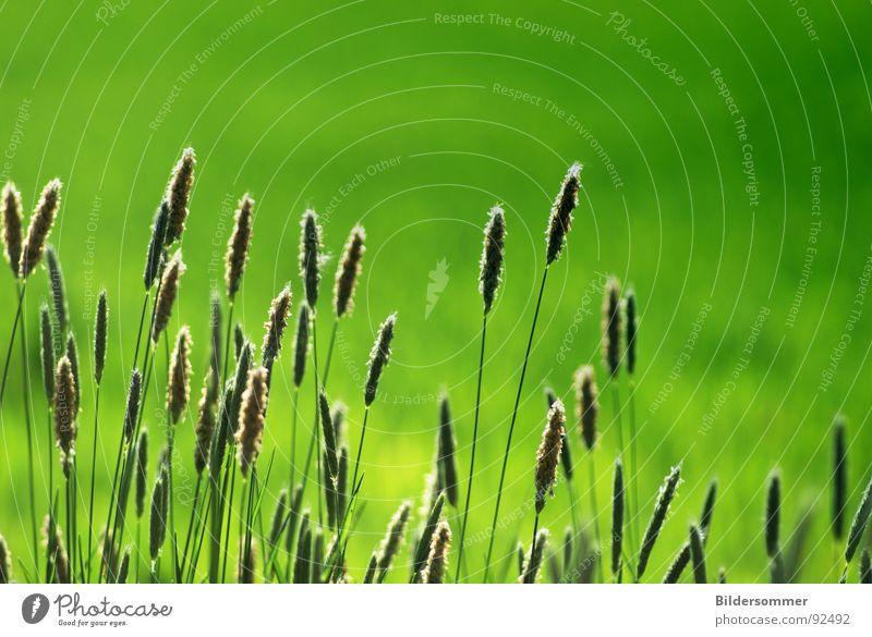 Am Wegesrand grün springen Gras Frühling Wege & Pfade Feld Getreide Wegrand