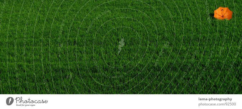 Orange steht Kopf Cloppenburg Regenschirm Sonnenschirm Unwetter Wolken Gras Halm Wiese Sommer Feld grün Frühling ruhig Einsamkeit Erholung Sonnenbad vergessen