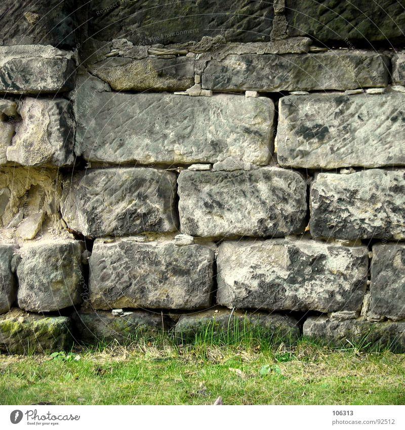 Frisch gestrichen! = Wet paint! Natur alt weiß grün Pflanze schwarz gelb dunkel Wiese Gras grau Stein Mauer hell Kunst Architektur