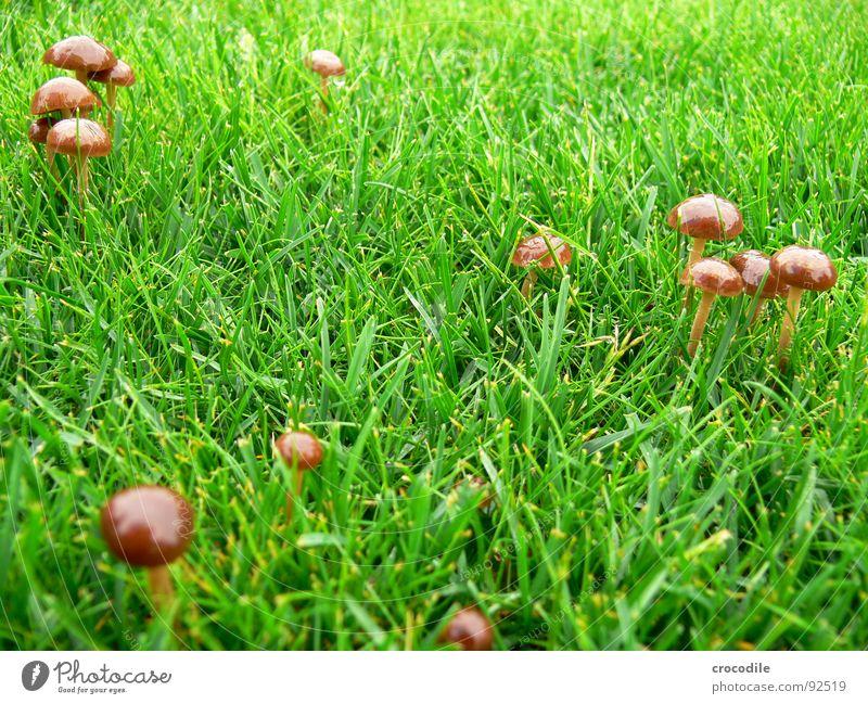 Pilz im grünen Gras braun Rasen Stengel Hut Gift schießen Pilzhut essbar