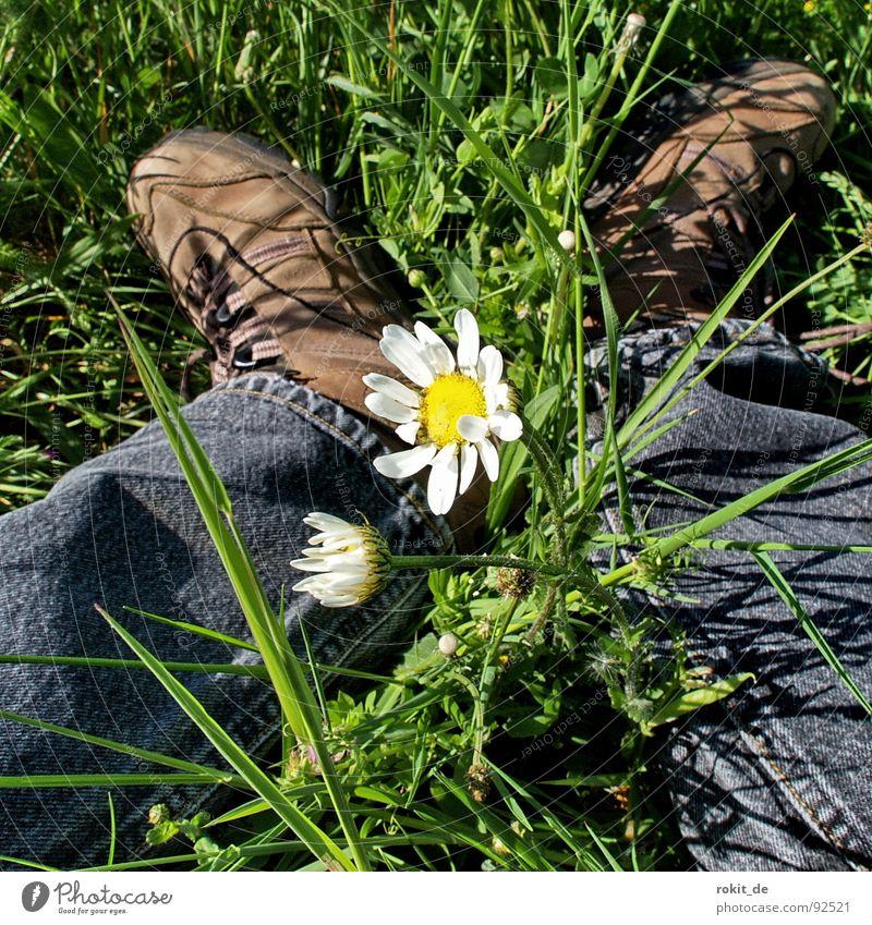 Durchwachsen weiß Blume grün schwarz gelb Erholung Wiese Gras Frühling Fuß Schuhe Beine Angst Jeanshose Pause Schutz
