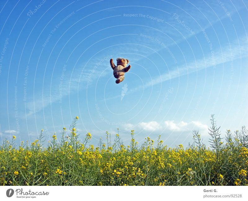den letzten beissen die Hunde hochwerfen springen Teddybär Spielzeug Hand Raps Rapsfeld mehrfarbig gelb braun Wolken Sommertag Phantomschmerz Behinderte Freude