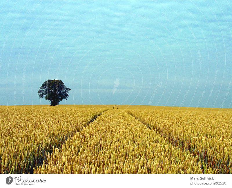 Das Feld Baum dunkel klein Ferne wellig Spuren Wolken gerade ruhig Außenaufnahme Sommer Tracktospur Himmel blau Freiheit Natur