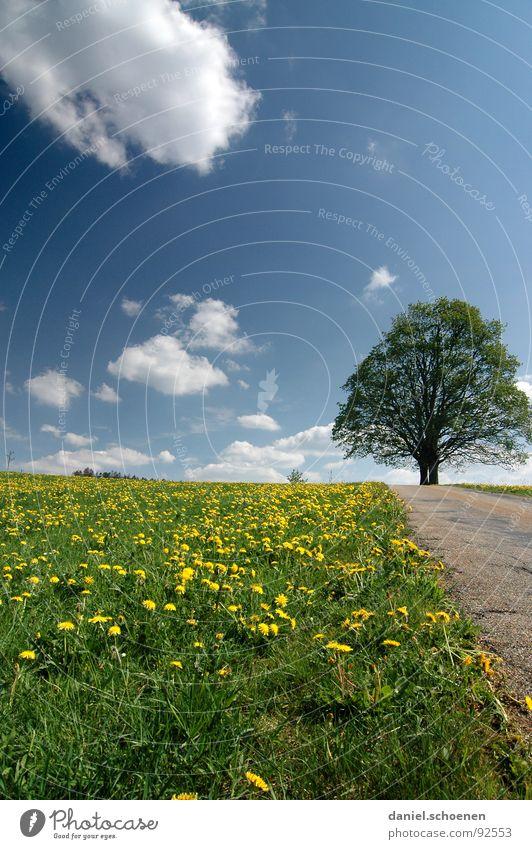 der Weg Wiese Baum Frühling Sommer schön grün gelb Löwenzahn Himmel Wege & Pfade Straße blau Wolkenhimmel