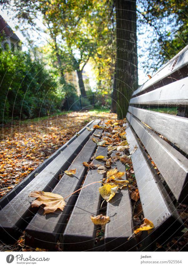 lange bank. ruhig Umwelt Natur Pflanze Herbst Schönes Wetter Baum Blatt Park Menschenleer Wege & Pfade sitzen gelb gold orange Romantik Design Erholung Idylle