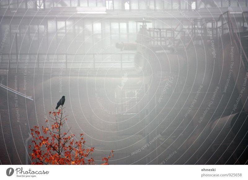 Early Bird Herbst Nebel Baum Ruhrgebiet Bochum Industrieanlage Jahrhunderthalle Vogel 1 Tier alt Krise stagnierend Farbfoto Gedeckte Farben Außenaufnahme