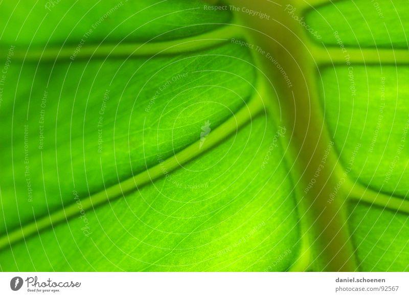 schön grün grün Pflanze Blatt Hintergrundbild Energiewirtschaft Wachstum Gefäße Monochrom Photosynthese hellgrün