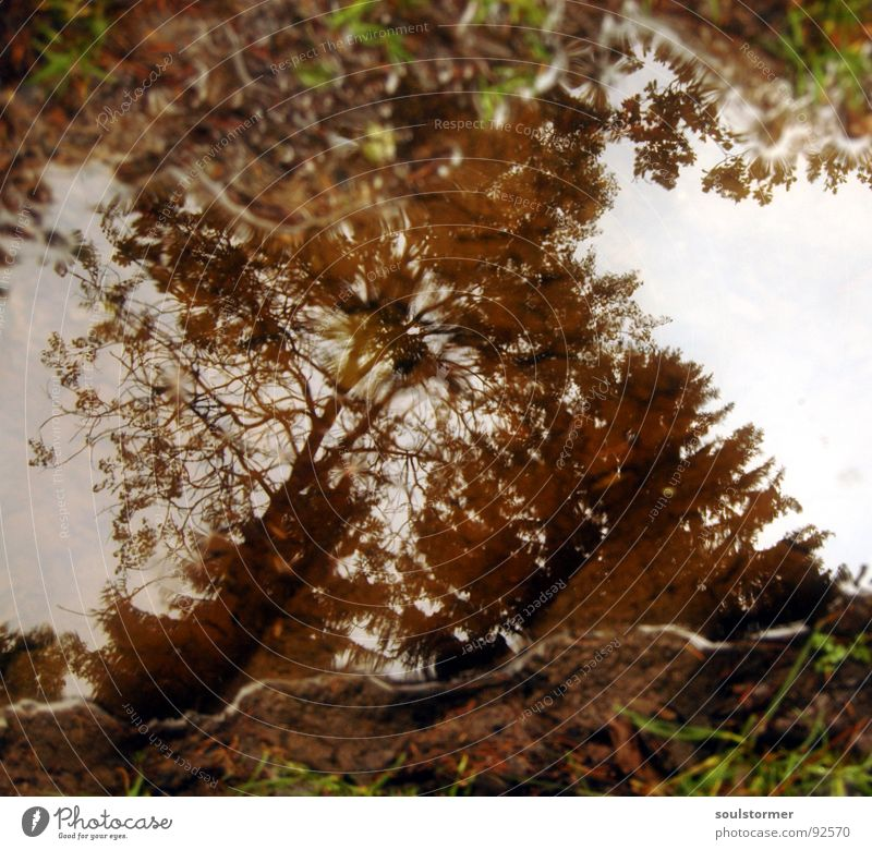 Pfütze... Spuren Wald Baum weiß braun grün Spiegel Reflexion & Spiegelung Regen Gras Schlamm Wolken dunkel nass dreckig Wasser Tracktor Himmel Wassertropfen