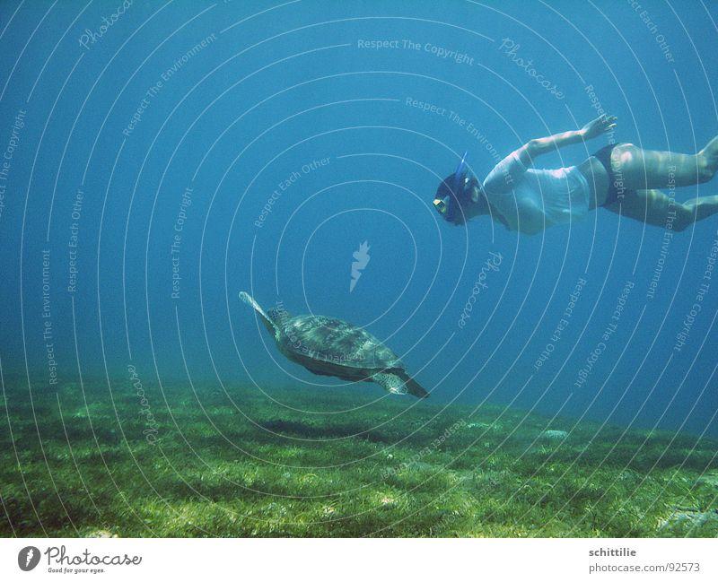 die große Freiheit Frau Wasser Meer grün blau Wiese Luft Rasen Freizeit & Hobby tauchen Wassersport Schildkröte Schnorcheln